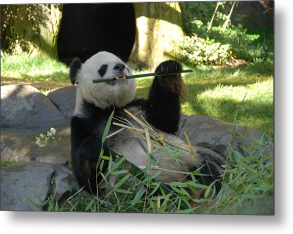 Happy Panda Metal Print