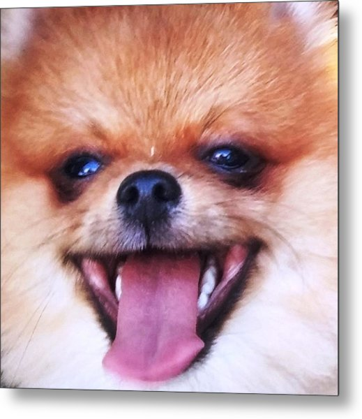 Happy Pom Metal Print by Teresa Ruiz