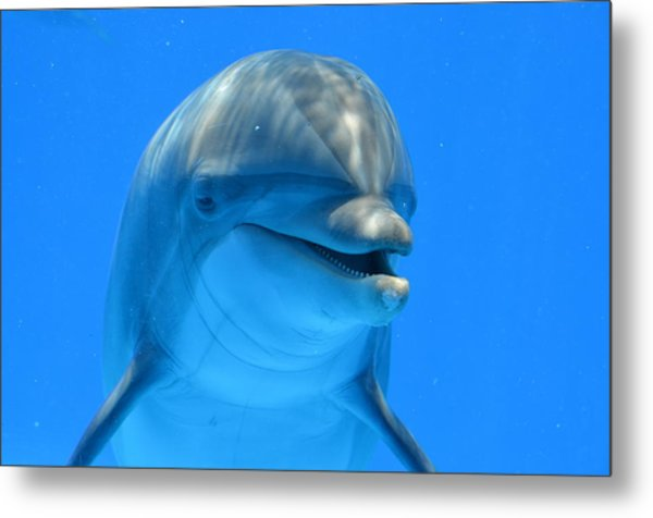 Happy Smiling Dolphin Metal Print