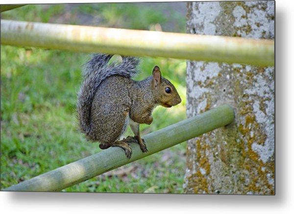 Happy Squirrel Metal Print