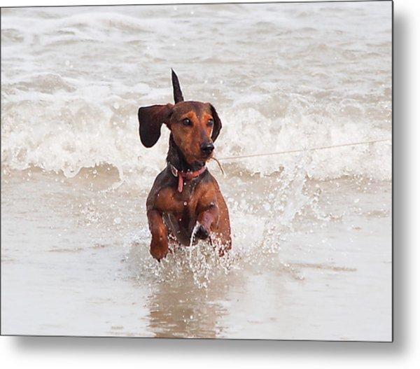 Happy Surf Dog Metal Print