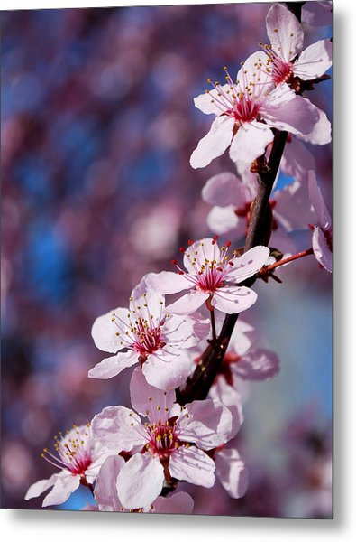 #happyfirstdayofspring Metal Print