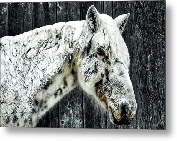 Hard Winter Metal Print