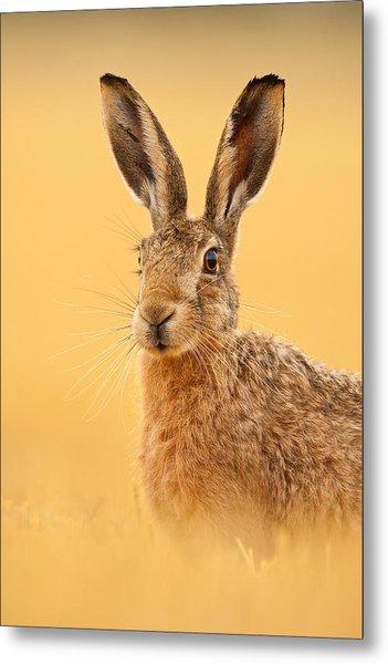 Hare In Barley Stubble Metal Print