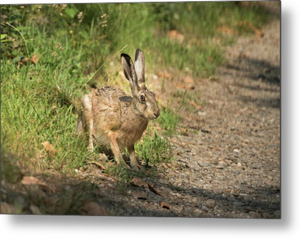 Hare In The Woods Metal Print