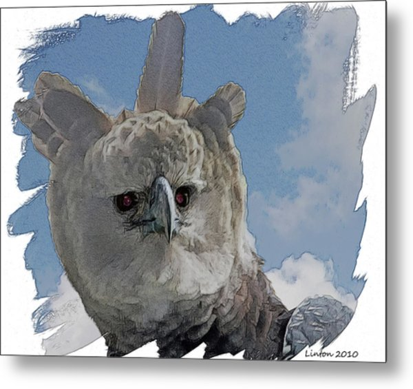 Harpy Eagle Portrait Metal Print