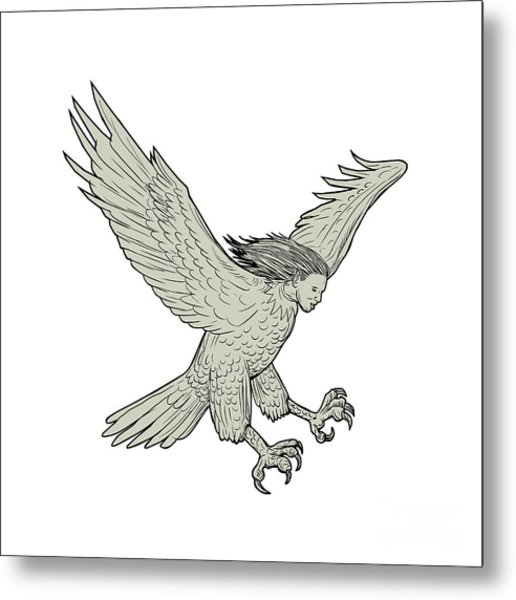 Harpy Swooping Drawing  Metal Print