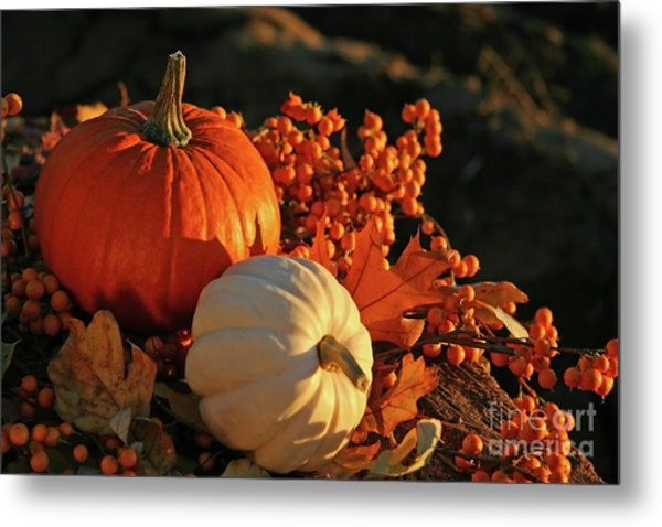 Harvest Colors Metal Print
