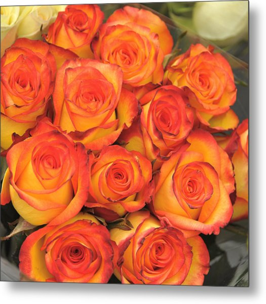 Harvest Roses Metal Print by JAMART Photography