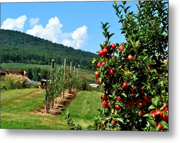 Harvest Time In The Catoctin Mountains Metal Print