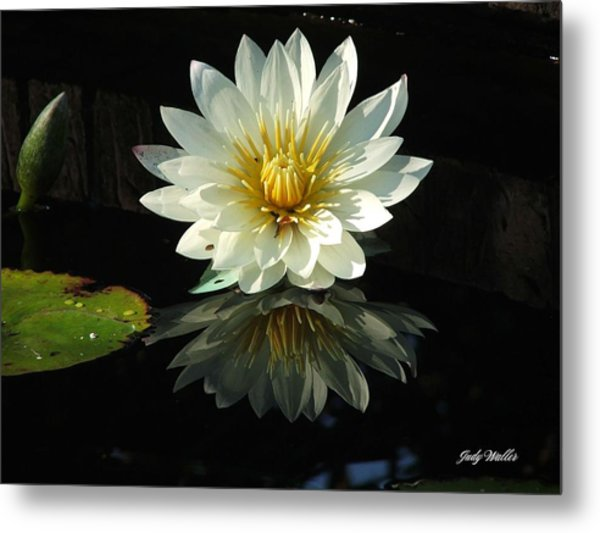 Haven Hospice Water Lily Metal Print by Judy  Waller