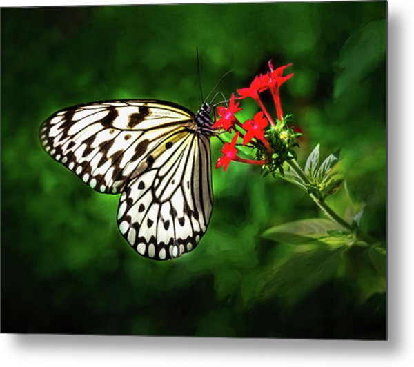 Haven't You Noticed The Butterflies? Metal Print