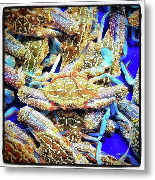 Having A Crabby Trip. But In A Good Metal Print by Mr Photojimsf