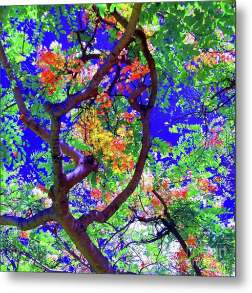 Hawaii Shower Tree Flowers In Abstract Metal Print