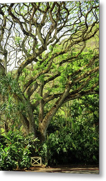 Hawaii Tree-bard Metal Print