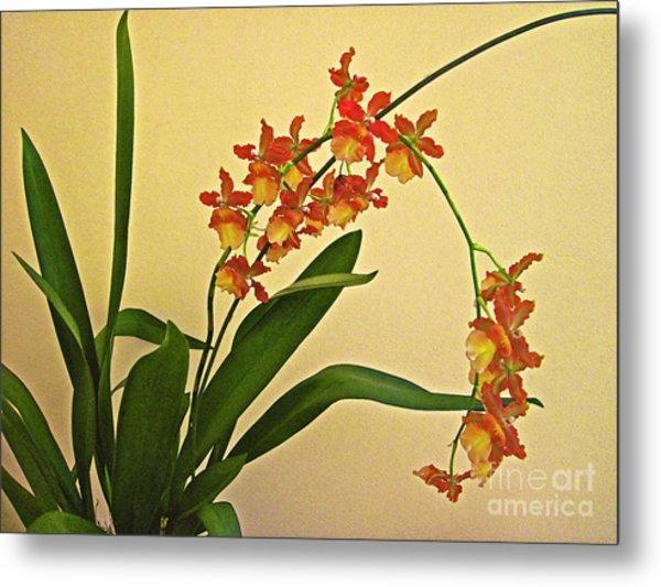 Hawaiian Orchid Spray Metal Print