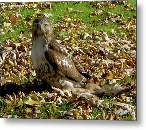 Hawk Falling Leaves Metal Print