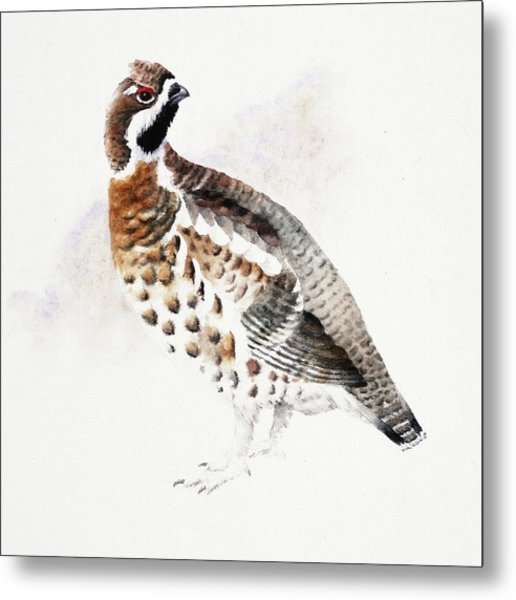 Hazel Grouse Metal Print