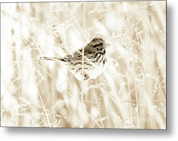 He Feeds The Sparrows Metal Print