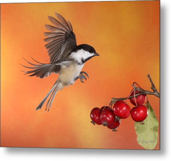 Heading Home For Lunch Metal Print