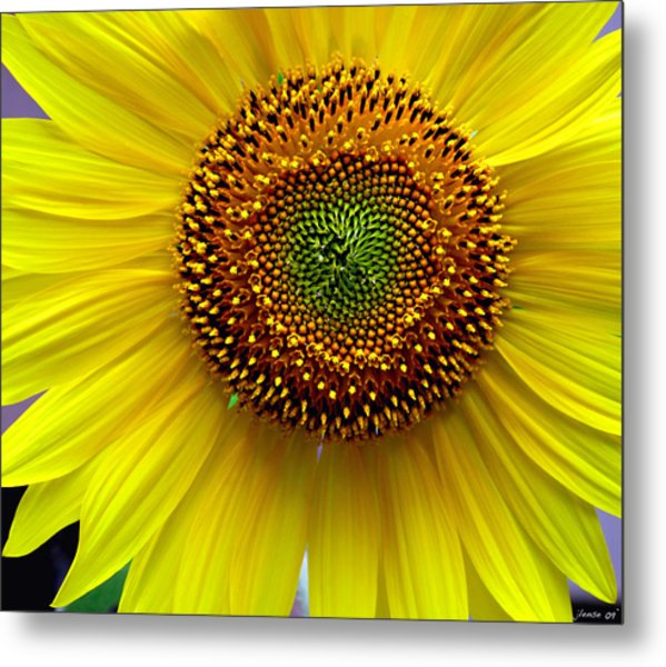 Heart Of A Sunflower Metal Print