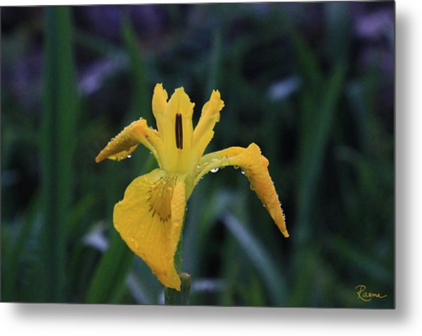 Heart Of Iris Metal Print