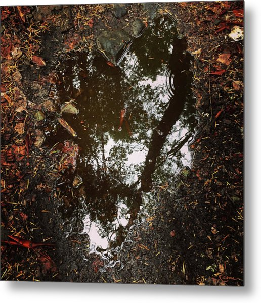 Metal Print featuring the photograph Heart Of The Wood by Rasma Bertz