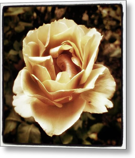 Heart Rose. Imagine Your Heart Is A Metal Print by Mr Photojimsf