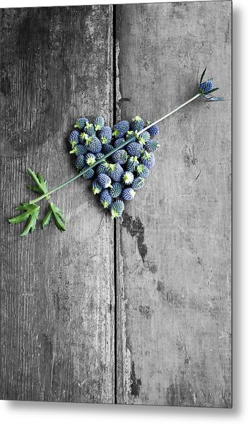 Heart Shaped Blue Thistle Buds With Arrow Stem Metal Print