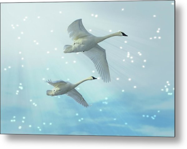 Heavenly Swan Flight Metal Print