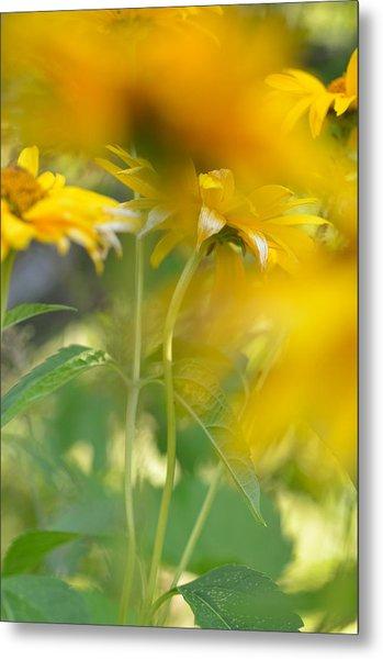 Heliopsis Blur Metal Print