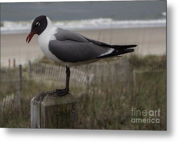 Hello Friend Seagull Metal Print