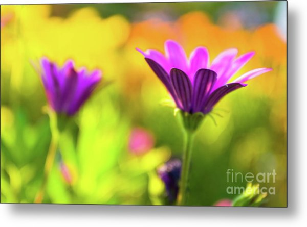 Metal Print featuring the photograph Hello Spring by Awais Yaqub