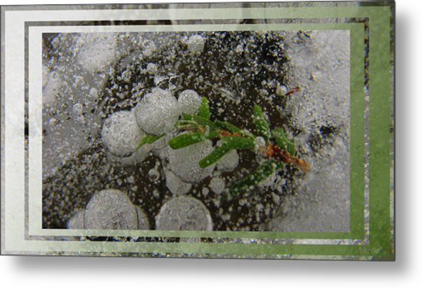 Hemlock In Bubbles Metal Print by Doug Bratten