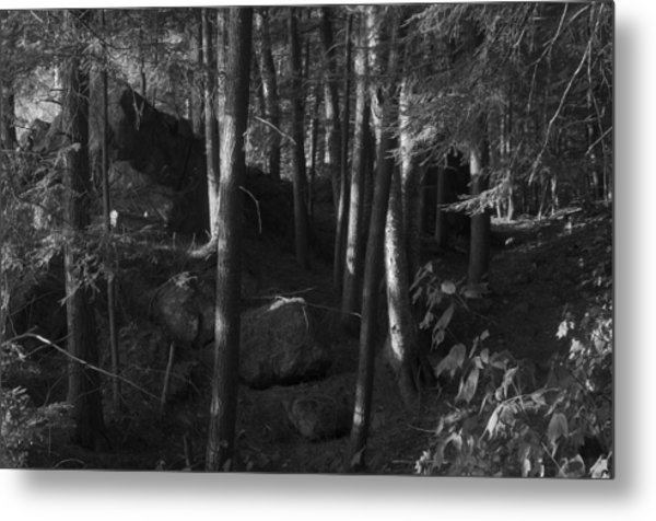 Hemlocks Metal Print