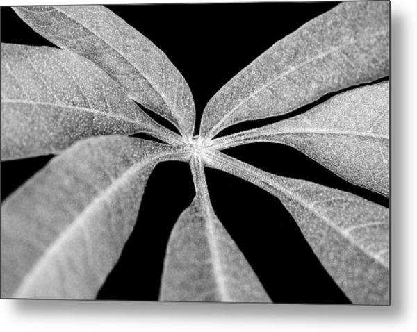 Hemp Tree Leaf Metal Print
