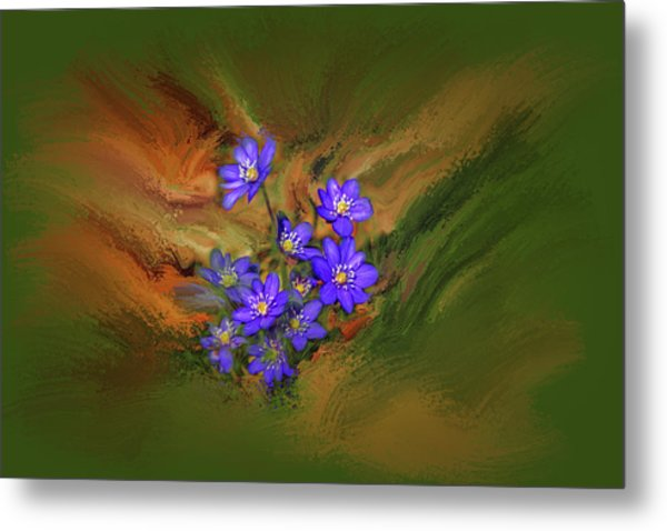 Hepatica Nobilis Painterly #h4 Metal Print