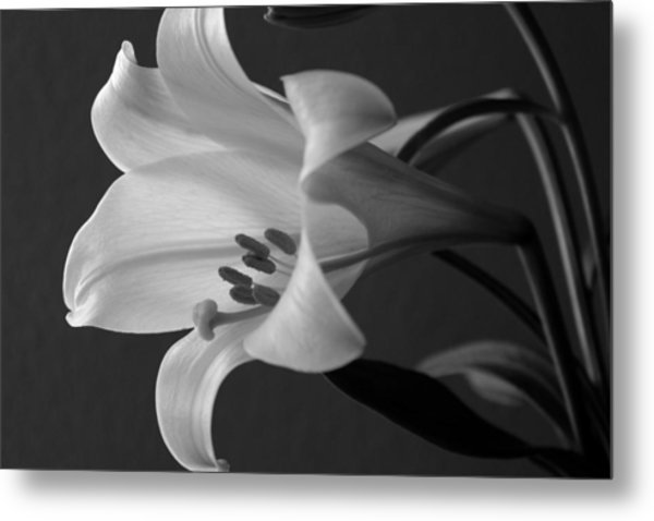 Her Name Was Lily Metal Print