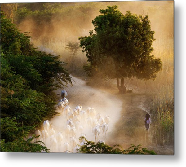 Metal Print featuring the photograph herd and farmer going home in the evening, Bagan Myanmar by Pradeep Raja Prints