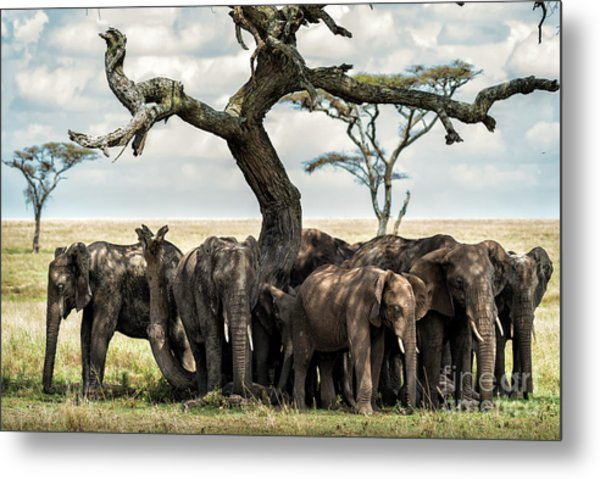 Herd Of Elephants Under A Tree In Serengeti Metal Print
