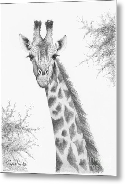 Metal Print featuring the drawing Here's Looking At You by Phyllis Howard