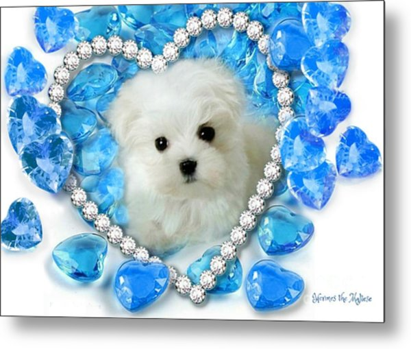 Hermes The Maltese And Blue Hearts Metal Print