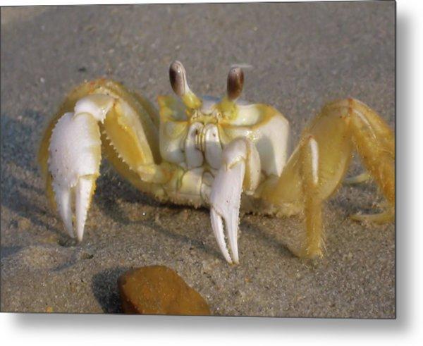 Hermit Crab Metal Print by JAMART Photography