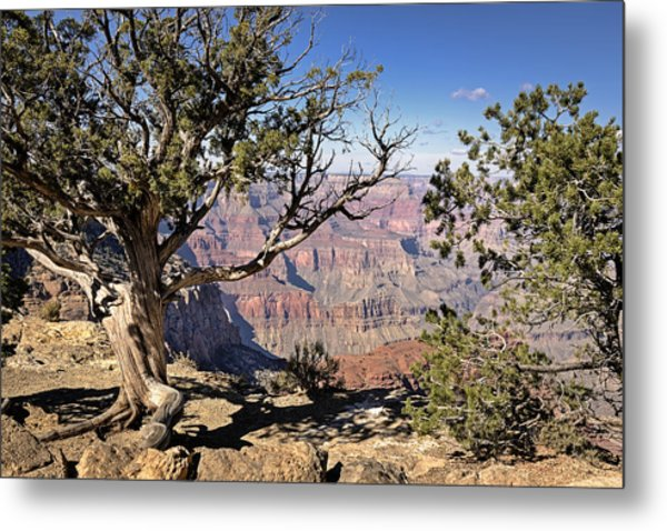 Metal Print featuring the photograph Hermits by John Gilbert