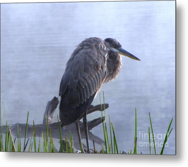 Heron 5 Metal Print