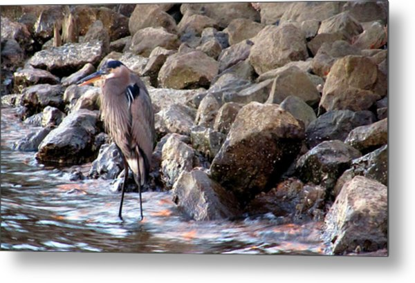 Heron At Sunset Metal Print by Nicole I Hamilton