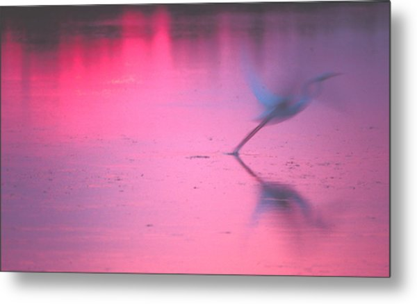 Heron At Sunset Metal Print