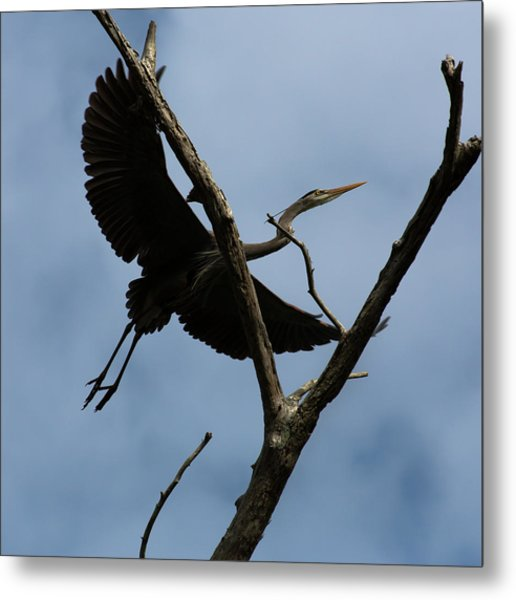 Heron Flight Metal Print