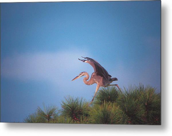 Heron In Tree Metal Print