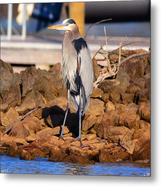 Metal Print featuring the photograph Heron On The Rocks by Lisa Wooten